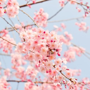 Všade samé kvety
