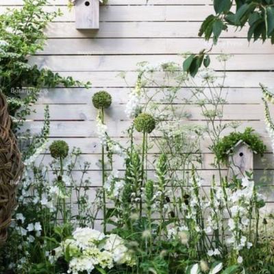 Návrh záhrady- štúdia