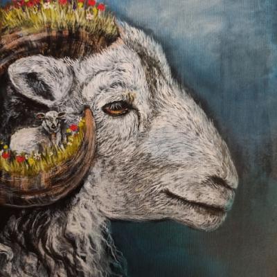 Idú ovce na pašu